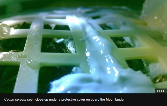 Chinas Moon mission sees first seeds sprout