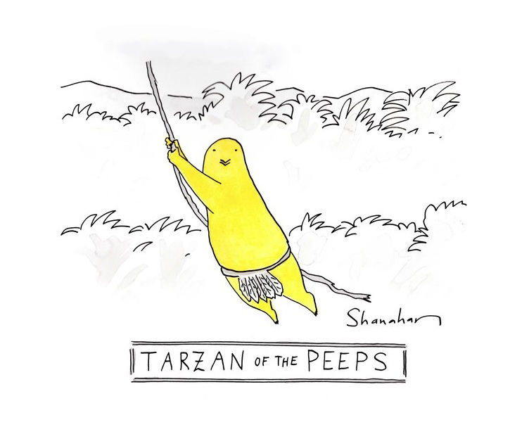 TARZAN OF THE PEEPS